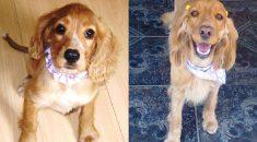 cachorro antes e depois