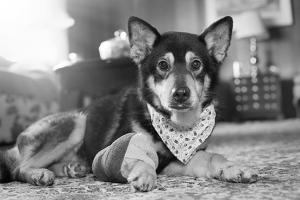 casal-de-idosos-oferece-final-de-vida-feliz-para-cachorro-com-cancer-terminal-03