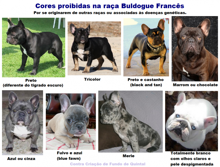 Cores do Buldogue Francês