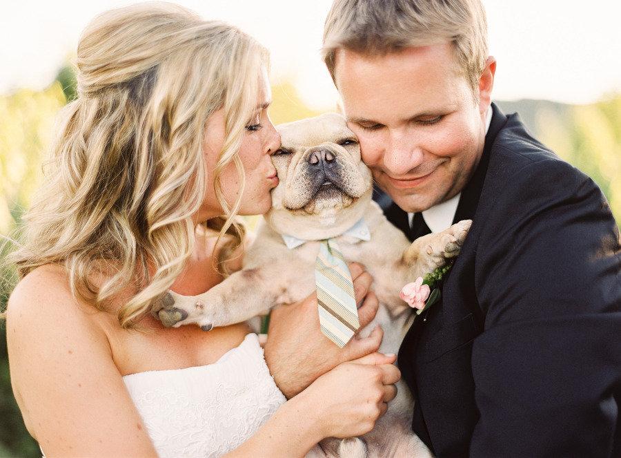 fotos de cachorros em casamentos