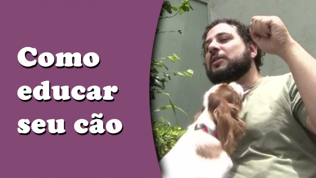 como educar o cachorro