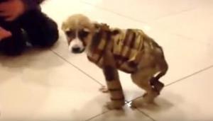 Família-adota-cão-doente-para-oferecer-final-de-vida-tranquilo-e-cão-sobrevive-03