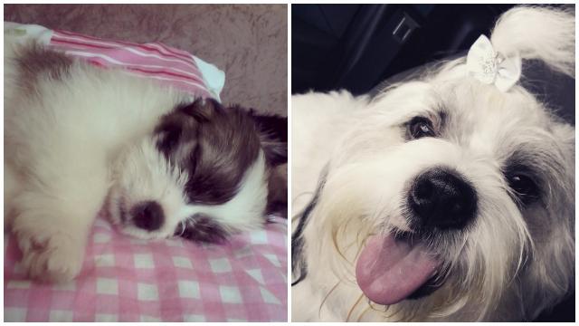 Bart, da Heimy. 2 meses /  2 anos