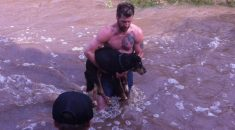 Homem-salva-cão-desconhecido-de-se-afogar-em-correnteza