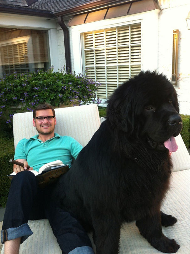 Huge-Dogs-Who-Think-They-Are-Small-8__605