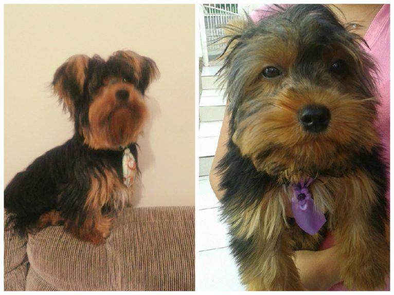 Ozzy, da Pâmela. 5 meses / 1 ano