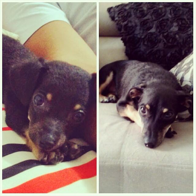 Ted, da Patrícia. 2 meses / 1 ano