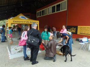 Presidente-do-time-Botafogo-já-ajudou-mais-de-35-mil-cães-abandonados-com-sua-ONG-pdd2-300x225