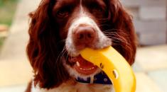 frutas pra cachorro