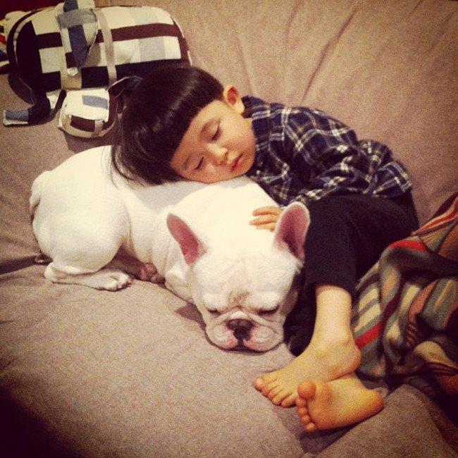 bulldog-dormindo-bebe-crianca