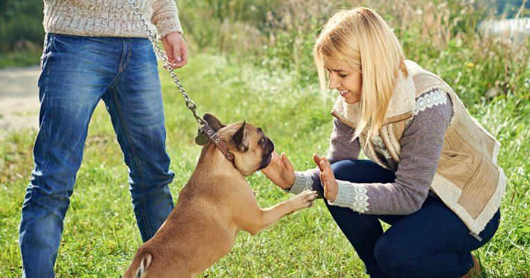 bulldog sociavel