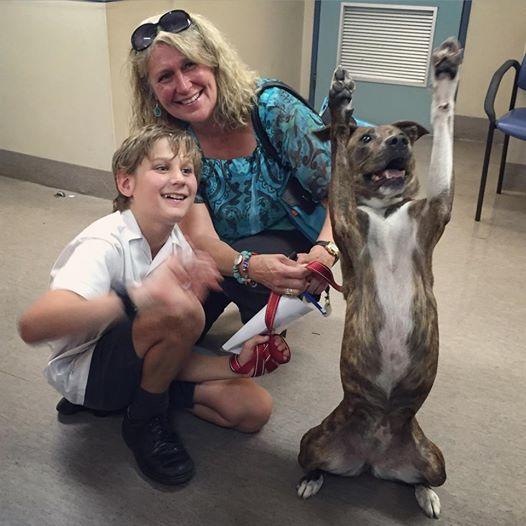 cachorra-cozo-hospital-veterinario-lord-smith