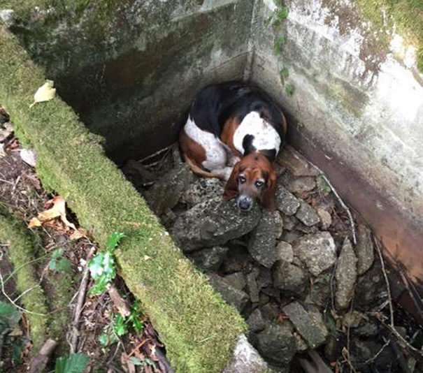 cachorra-espera-uma-semana-amiga-cisterna-noticia-02