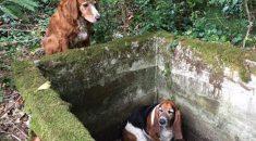 cachorra-espera-uma-semana-amiga-cisterna-noticia