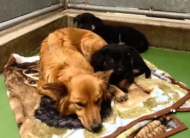 cachorra-foge-canil-salvar-filhotes
