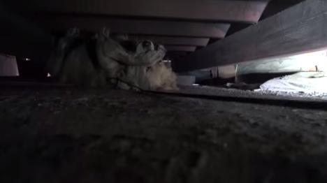 cachorra-medo-resgate-reacao-incrivel-02