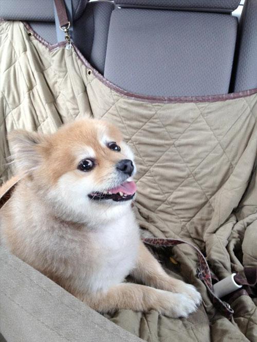cachorro-adotado-12