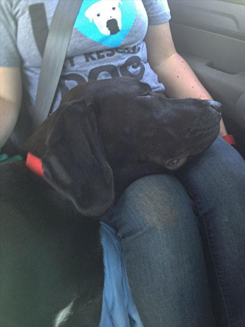 cachorro-adotado-13