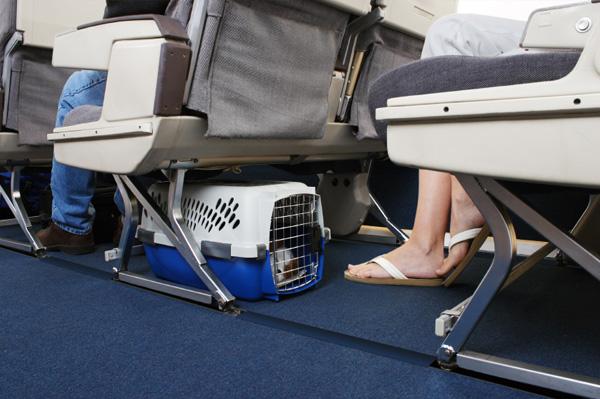viajar com cachorro no avião