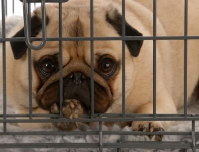 deixar o cachorro de castigo