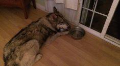 cachorro-comprado-pela-internet-encontrado-desnutrido