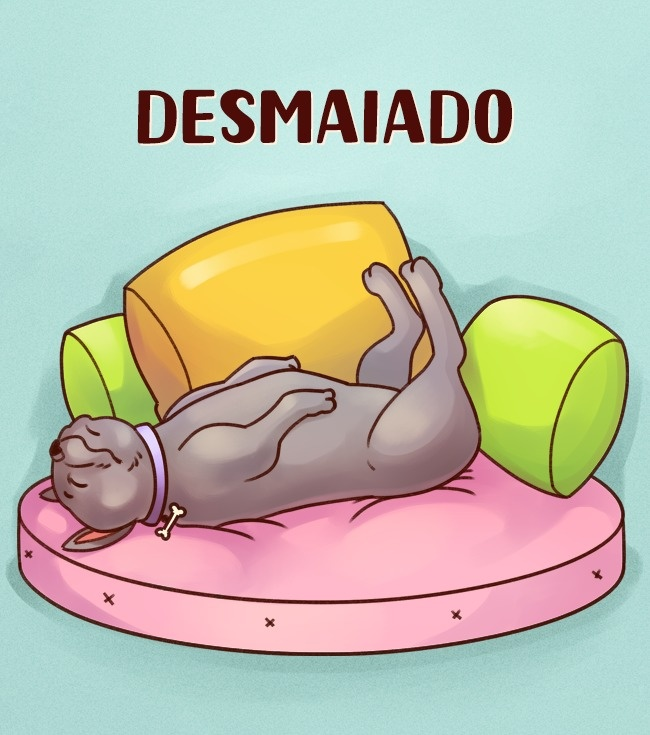 cachorro-desmaiado