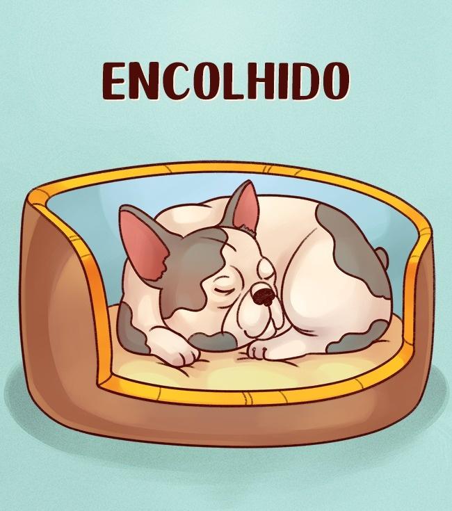 cachorro-dormindo-encolhido