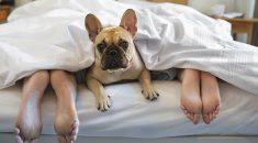 cachorro dormir na cama