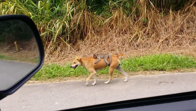 cachorro e macaco