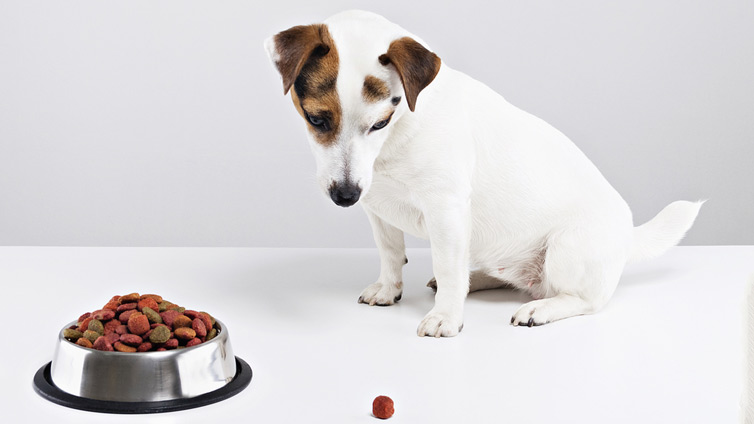 Dog Wont Eat Or Drink Low Blood Sugar