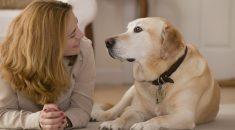 cachorro-entende-o-que-falamos