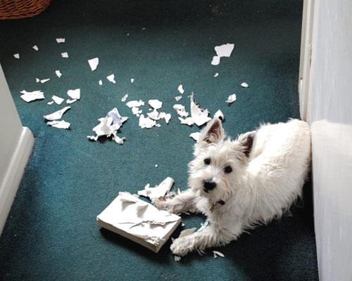 Resultado de imagem para cachorro bagunça