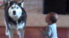 cachorro-imitando-bebe
