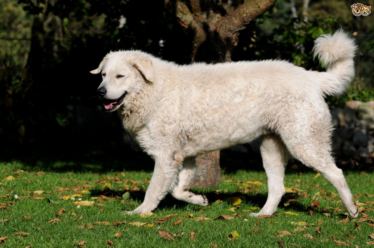 Large Breed Dogs For Sale In North Carolina