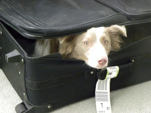 cachorro-mala-despedida-mulher-estado-terminal