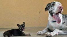 cachorro-pequeno-e-mais-desobediente