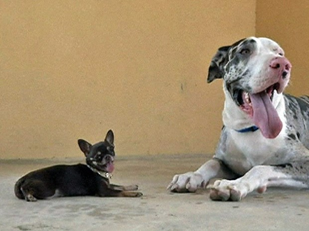 cachorro-pequeno-e-mais-desobediente-02