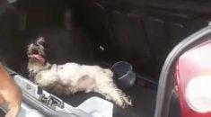 cachorro-preso-porta-mala