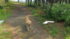 cachorro-google-street-view