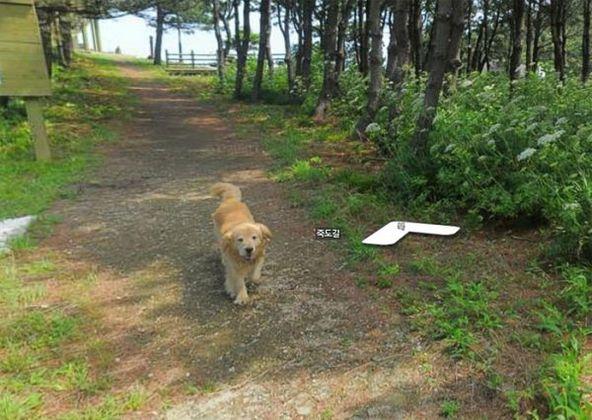cachorro-segue-aparelho-do-google-street-view-e-aparece-em-todas-fotos-do-bairro-01