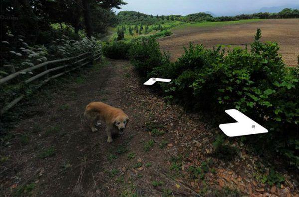 cachorro-segue-aparelho-do-google-street-view-e-aparece-em-todas-fotos-do-bairro-05