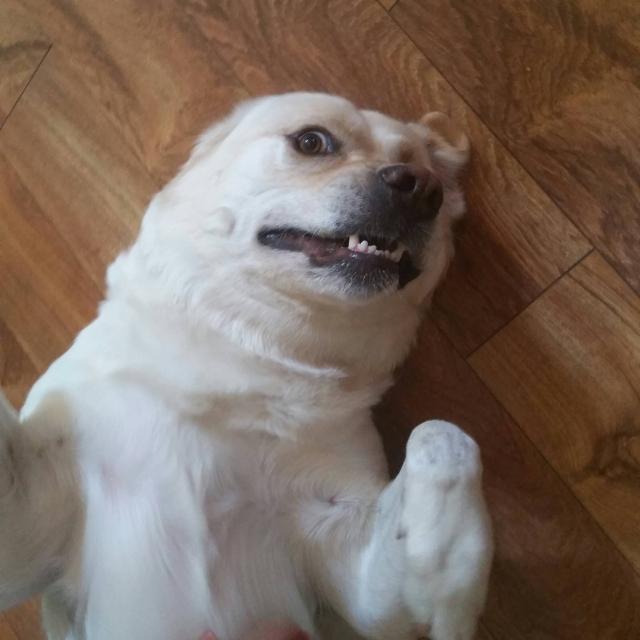 cachorro-selfie-05