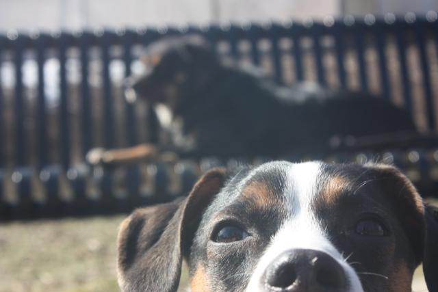 cachorro-selfie-06