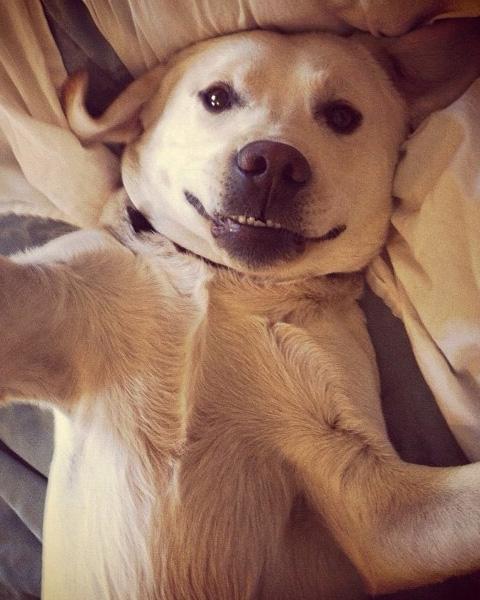 cachorro selfie