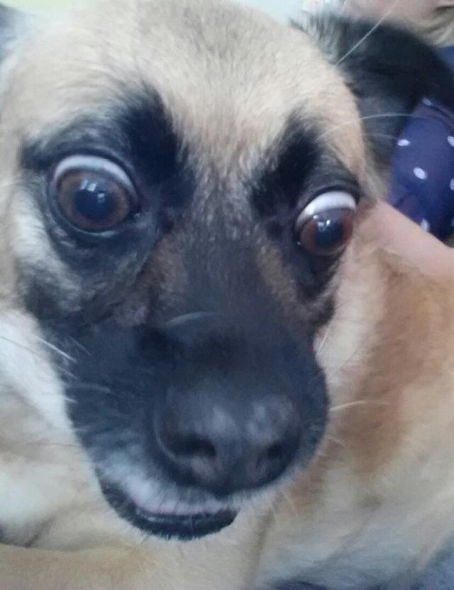 cachorro-selfie-11