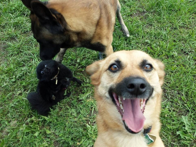 cachorro-selfie-13
