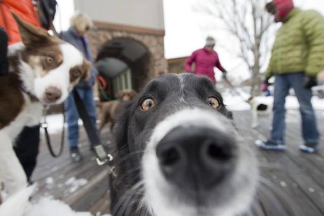 cachorro-selfie-14