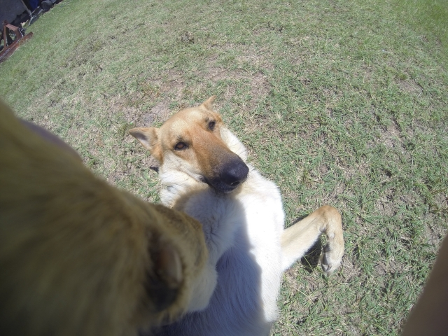 cachorro-selfie-18