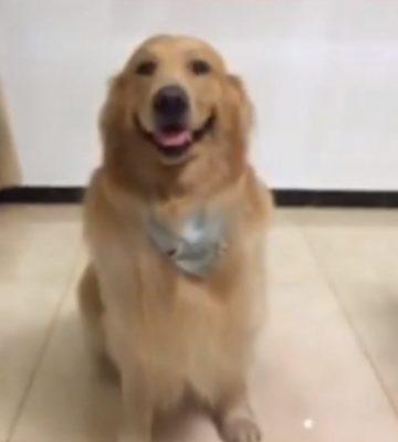 cachorro-sorri-camera