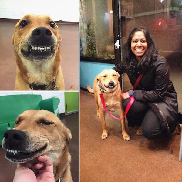 cachorro-sorridente-apos-ser-adotado-002